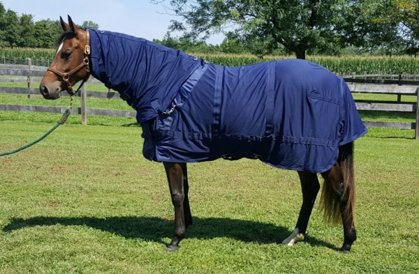 mesh sheet with neck cover