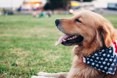 therapy products for dogs