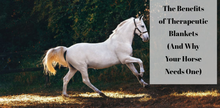 therapy products for horses
