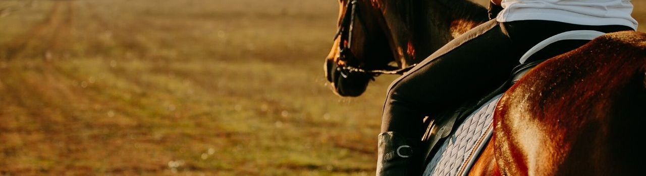 How People Can Benefit from Equine-Assisted Therapy