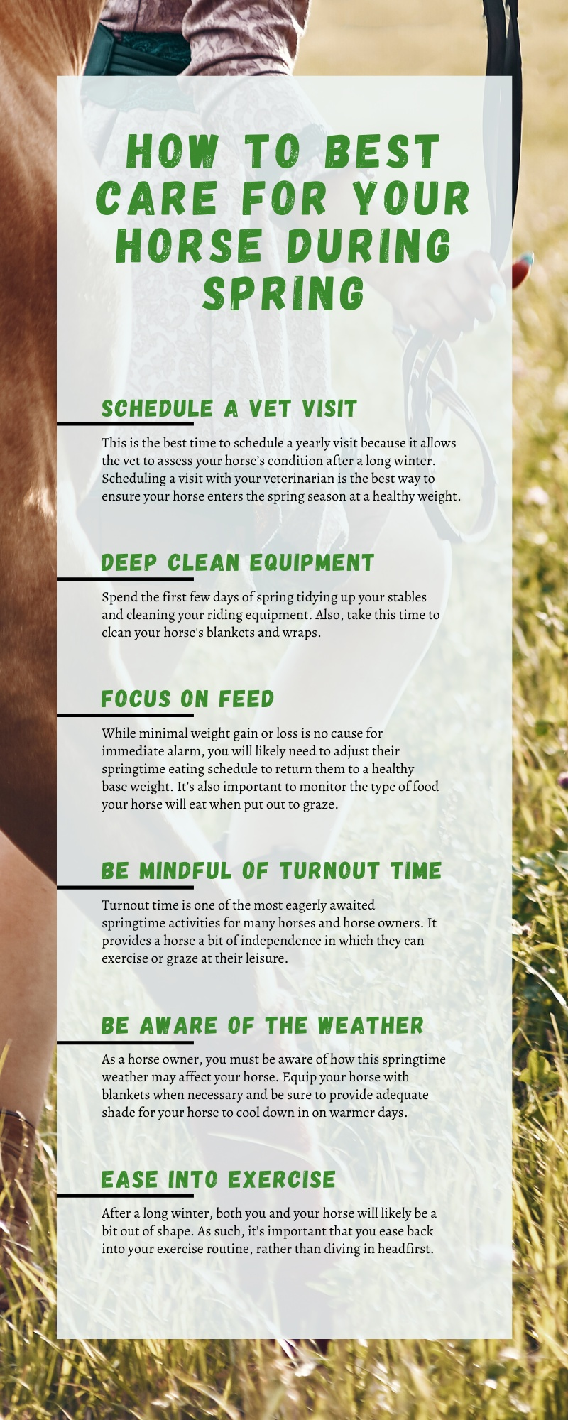 How to Best Care for Your Horse During Spring