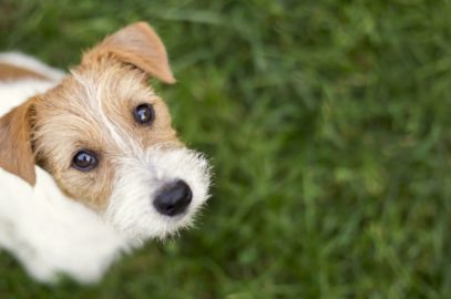 Understanding the Different Stages in Your Dog's Life